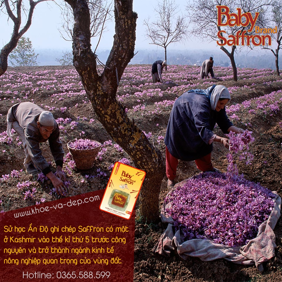 Baby Brand Saffron - Nhụy hoa nghệ tây Ấn Độ